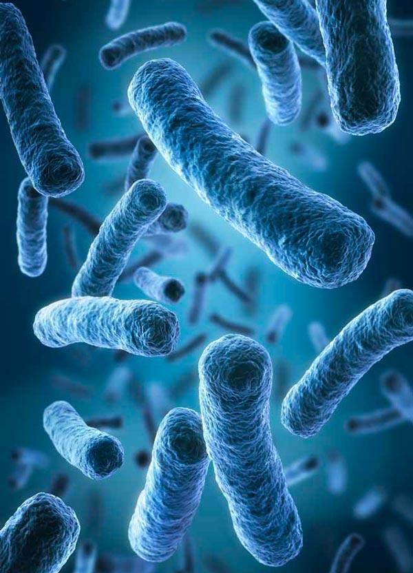 Batterio Legionella Pneumophila